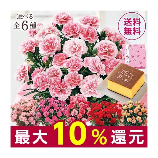 母の日 プレゼント ギフト スイーツ セット 2020 お花 花 送料無料 花鉢 カーネーション パティシエール カステラ 5号