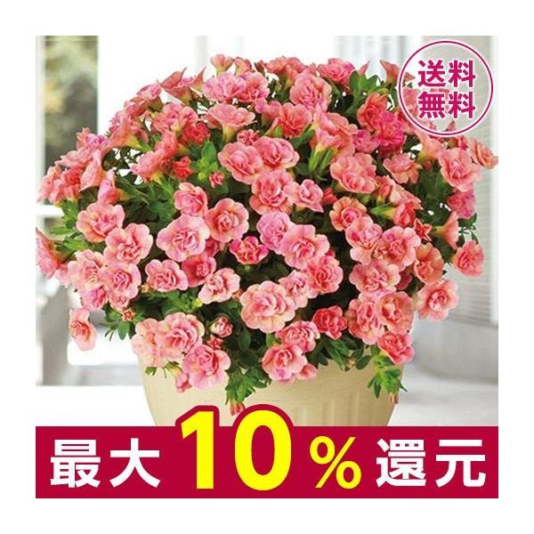 母の日 プレゼント ギフト 2020 お花 花 送料無料 花鉢 母の日期間お届け カリブラコア ピーチ イエロー 5号