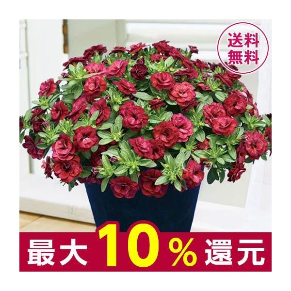 母の日 プレゼント ギフト 2020 お花 花 送料無料 花鉢 母の日期間お届け カリブラコア アンティーク レッド 5号