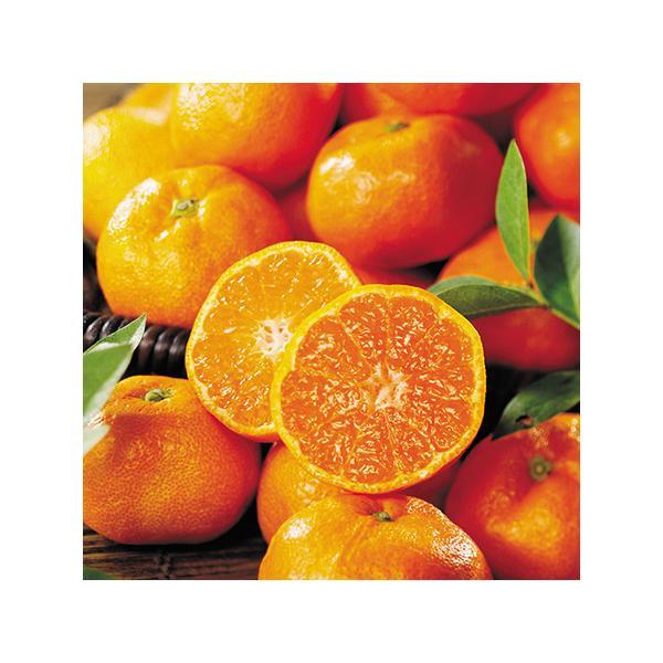 フルーツ みかん 果物 和歌山 山 有田みかん 5kg 11月下旬より順次出荷 お歳暮 御歳暮 ギフト 贈り物 送料無料