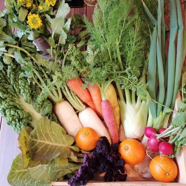 九州産 有機野菜「農園てとて」さんの季節の有機野菜おまかせセット|beorganicmarket
