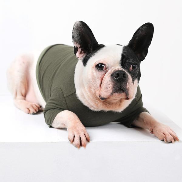 BF コットンカーキTS       犬 服 犬の服 ドッグウェア Tシャツ シンプル ライン  薄手 コットン 綿 生地 伸縮 伸びる 無地|best-friends|06