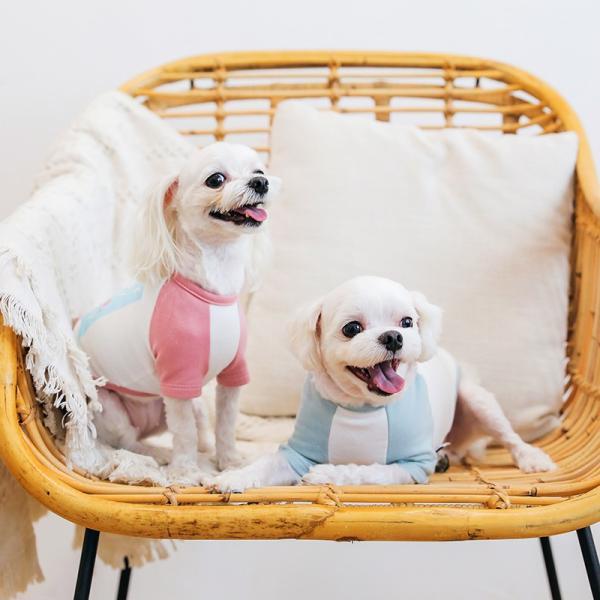 アルファベットラグランTシャツ     ,XXL  犬 服 犬の服 ドッグウェア Tシャツ  秋 冬 おしゃれ かわいい パステル コットン 綿100% プリント|best-friends|03