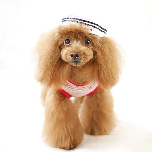 犬 服 夏用 涼しい マリンボーダータンク / 犬の服 ドッグウェア 犬服 小型犬 中型犬 夏 タンクトップ ノースリーブ 袖なし 洋服|best-friends|05