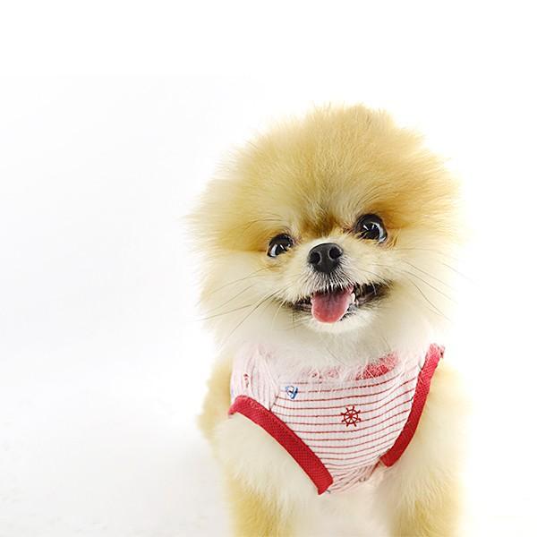 犬 服 夏用 涼しい マリンボーダータンク / 犬の服 ドッグウェア 犬服 小型犬 中型犬 夏 タンクトップ ノースリーブ 袖なし 洋服|best-friends|06