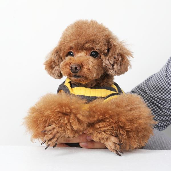 BF ボーダータンク   ,XXL犬服 犬の服 ドッグウェア夏 タンクトップ ノースリーブ スタッフ  綿 コットン 100%|best-friends|08