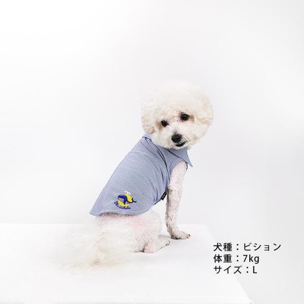 シアサッカー ストライプ シャツ      犬 服 夏 クール 犬の服 ドッグウェア シャツ おしゃれ スナップボタン best-friends 02