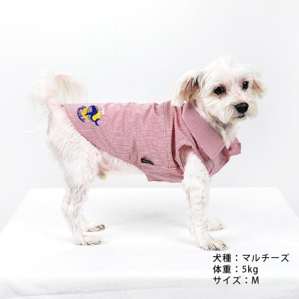 シアサッカー ストライプ シャツ      犬 服 夏 クール 犬の服 ドッグウェア シャツ おしゃれ スナップボタン best-friends 05
