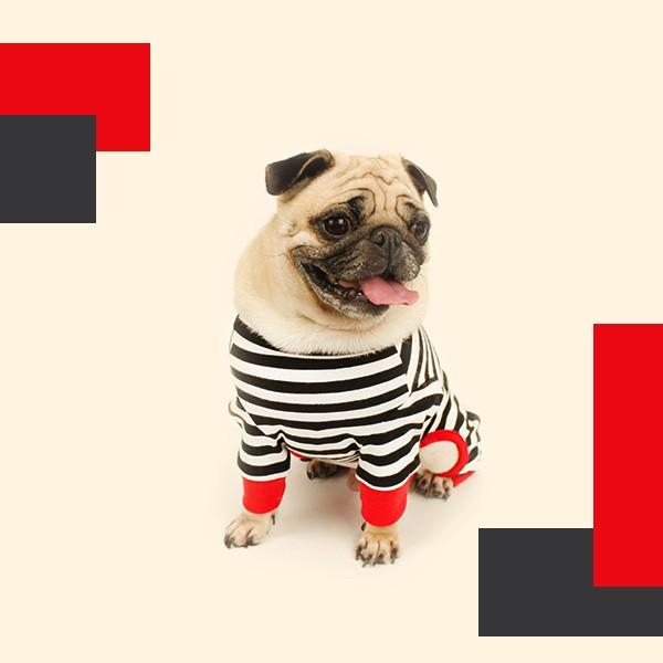 ロゴプリントボーダーロンパース   S,SM,M,L,XL,XXL 犬 服 犬の服 ドッグウェア 秋 冬 ボーダー カバーオール つなぎ 綿100% 伸縮性抜群|best-friends|06