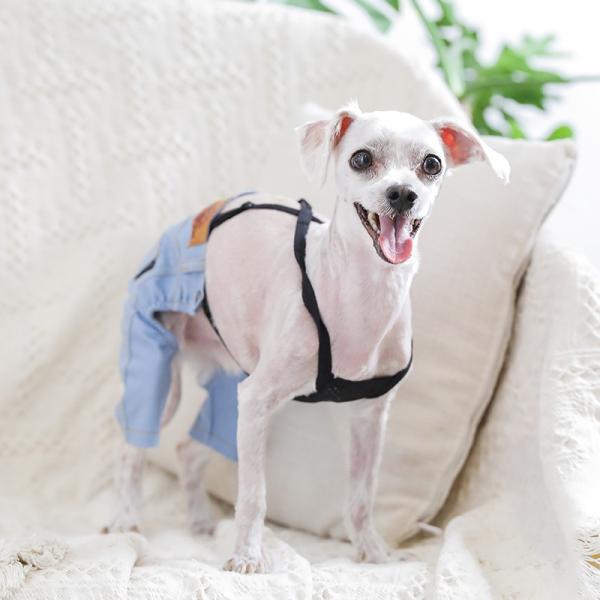 デニム パンツ      犬 服 犬の服 ドッグウェア デニム パンツ ズボン ジーパン ジーンズ ストレッチ|best-friends|09