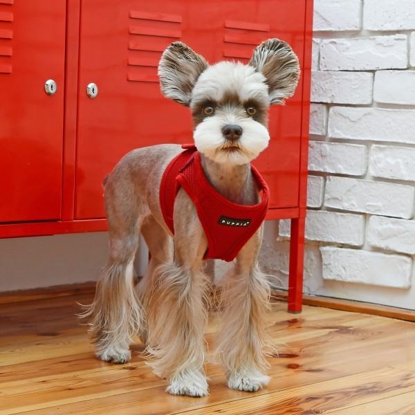PUPPIA パピア ソフトベストハーネス XS,S,M,L小型犬 中型犬 ハーネス ベストハーネス メッシュ 通気性 ペット 胴輪 犬 ドッグ|best-friends|12