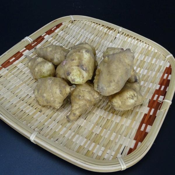 菊芋生 土つき 2kg キクイモ きくいも 農薬化学肥料不使用 国産おかやま備中産  シーズン終了間近|bicchu|02