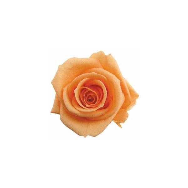 フロールエバースタンダードローズ*16シャーベットオレンジ