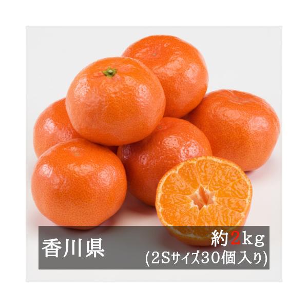 さぬき紅ハウスみかん(小原紅早生) 約2.5kg 2Sサイズ38個入り 香川県産