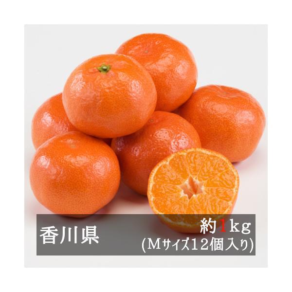 さぬき紅ハウスみかん(小原紅早生) 約1.2kg Mサイズ12個入り 香川県産