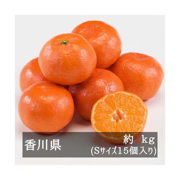 さぬき紅ハウスみかん(小原紅早生) 約1.2kg Sサイズ15個入り 香川県産