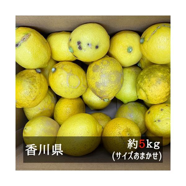 訳ありさぬきレモン約5kgサイズおまかせ香川県産