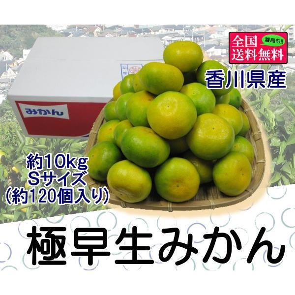 極早生みかん 約10kg Sサイズ(約120個) 香川県産