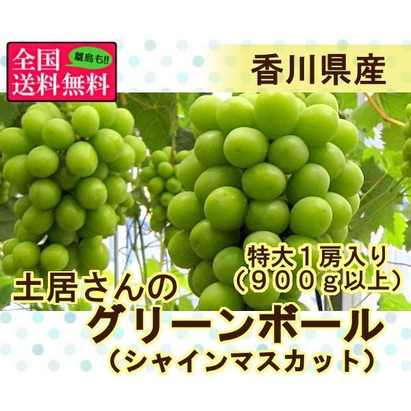 土居さんのグリーンボール(シャインマスカット) 特大1房入り約900g以上 香川県産