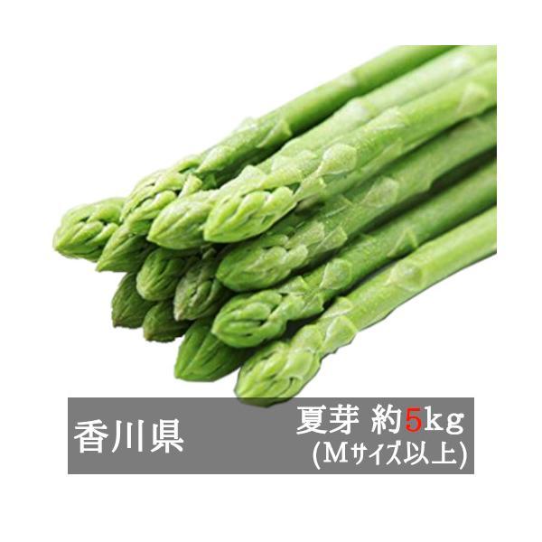 アスパラガス さぬきのめざめ夏芽 約5kg 香川県産