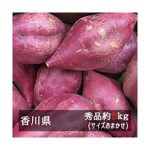 早掘りさつまいも 約5kg 香川県産