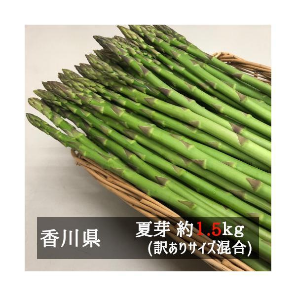 アスパラガス お徳用さぬきのめざめ夏芽(約30cm)サイズ混合 約1.5kg 香川県産