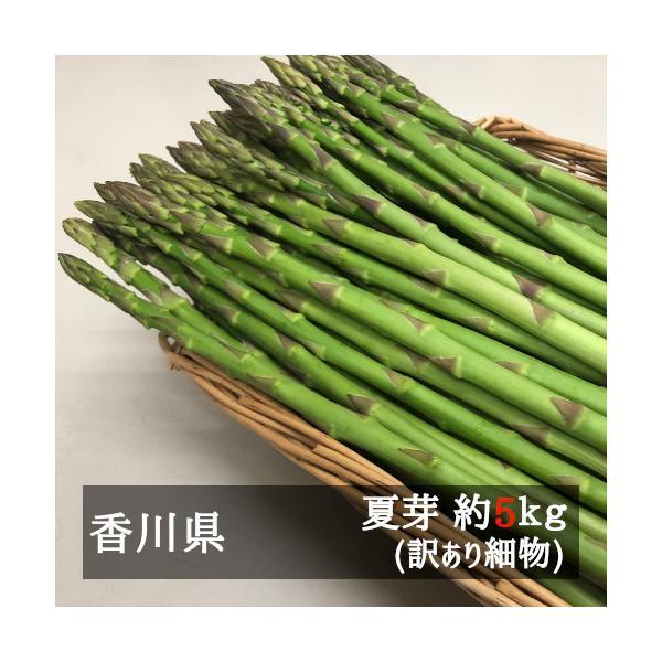 アスパラガス 訳あり細物さぬきのめざめ夏芽(約30cm) 約5kg 香川県産