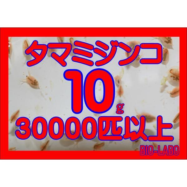 タマミジンコ 10g  bio-labo