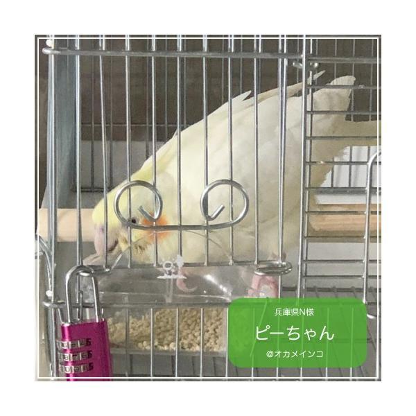 ハリソンバードフード ペレット/アダルトライフタイム スーパーファイン bird-style 02