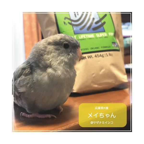 ハリソンバードフード ペレット/アダルトライフタイム スーパーファイン bird-style 07