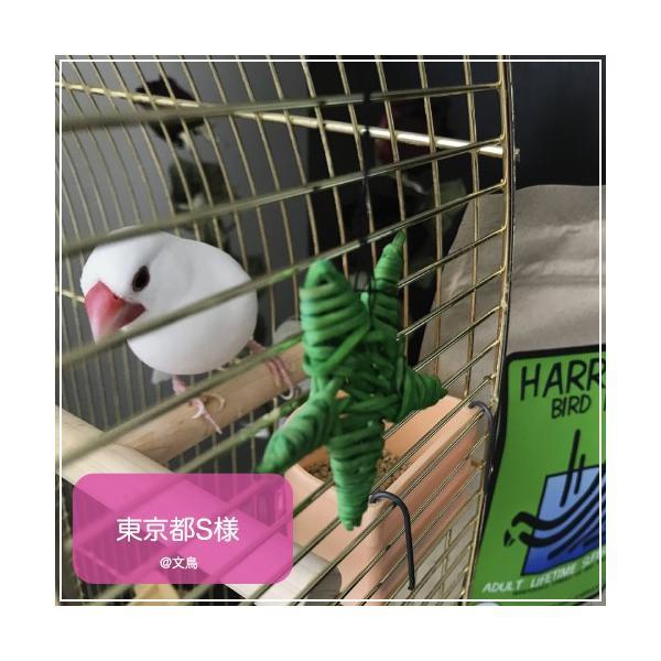 ハリソンバードフード ペレット/アダルトライフタイム スーパーファイン bird-style 08