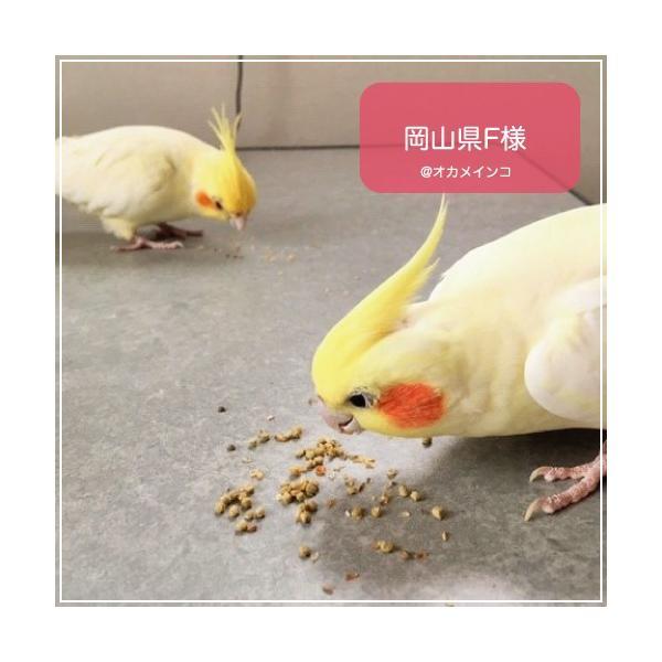 ハリソンバードフード ペレット/アダルトライフタイム スーパーファイン bird-style 09