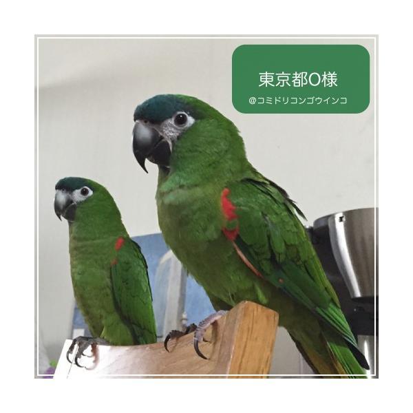 ハリソンバードフード ペレット/アダルトライフタイム ファイン|bird-style|02