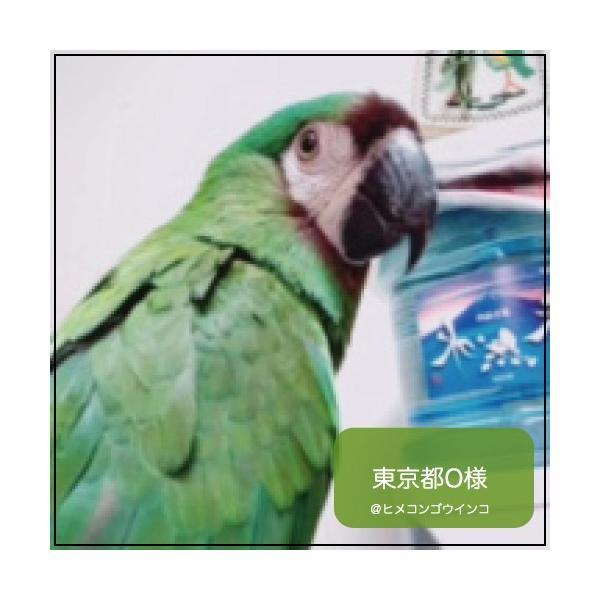ハリソンバードフード ペレット/アダルトライフタイム ファイン|bird-style|05