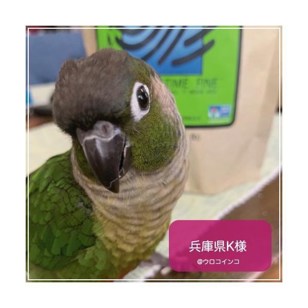 ハリソンバードフード ペレット/アダルトライフタイム ファイン|bird-style|06