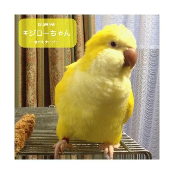 ハリソンバードフード ペレット/ハイポテンシー スーパーファイン|bird-style|02