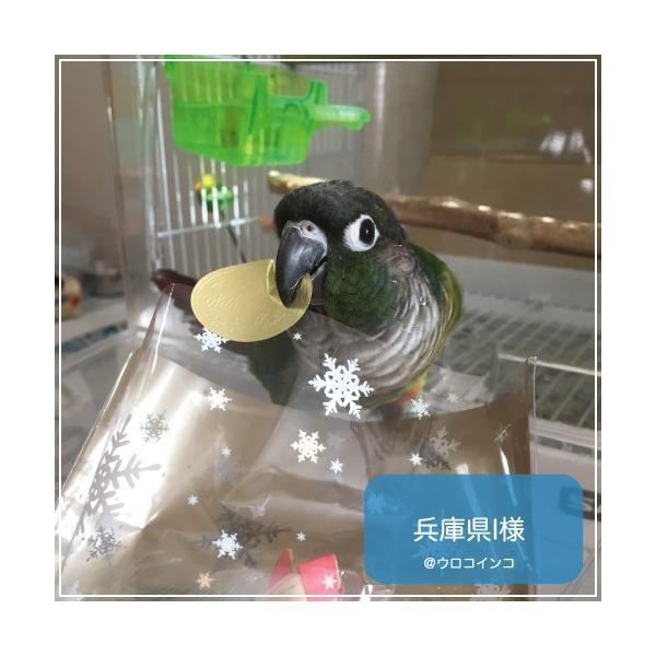 ハリソンバードフード ペレット/ハイポテンシー スーパーファイン|bird-style|04