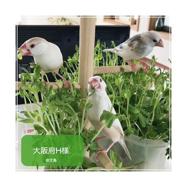 ハリソンバードフード ペレット/ハイポテンシー スーパーファイン|bird-style|06