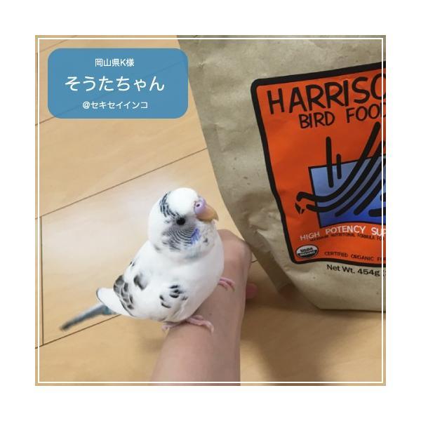 ハリソンバードフード ペレット/ハイポテンシー スーパーファイン|bird-style|08