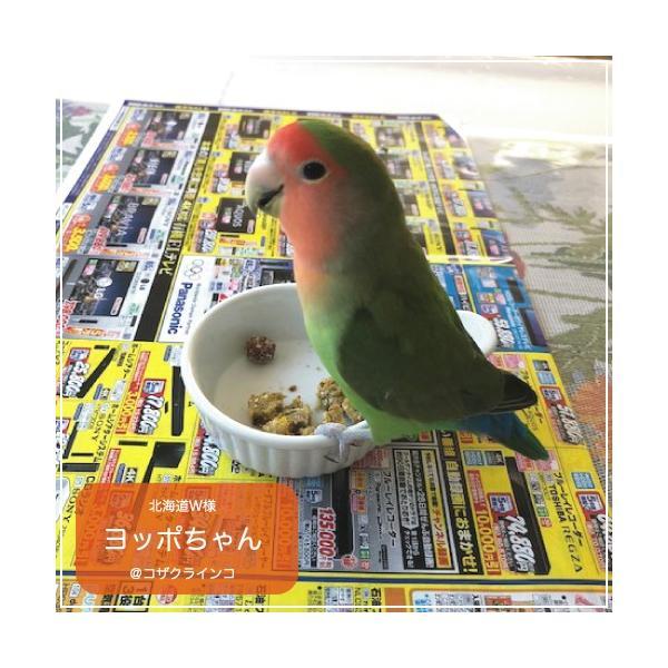 ハリソンバードフード ペレット/バードブレッドミックス (オリジナル)|bird-style|02