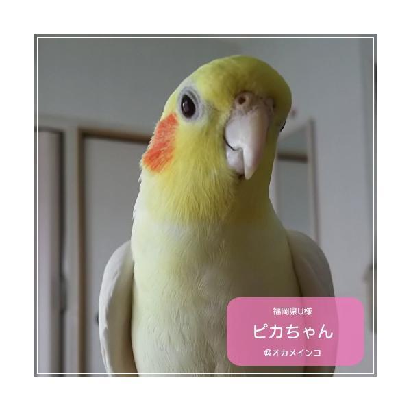 鳥専用 サプリメント/ネクトンS (35g) bird-style 02