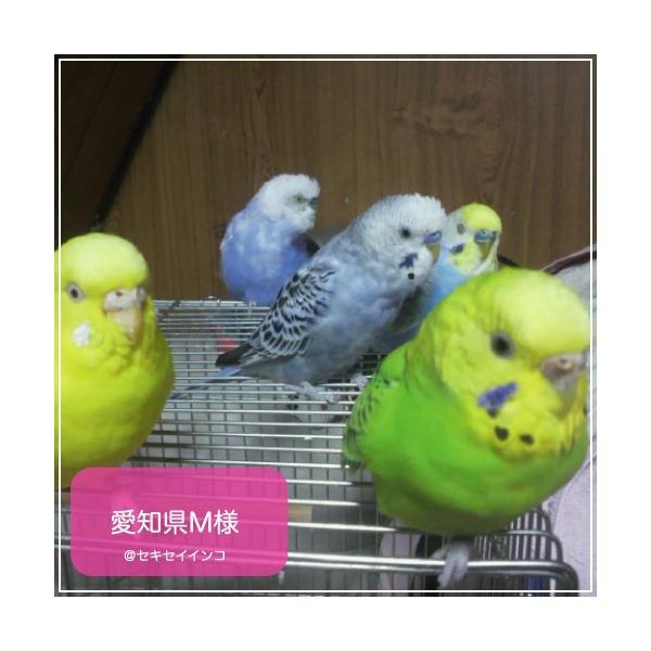 鳥専用 サプリメント/ネクトンS (35g) bird-style 03