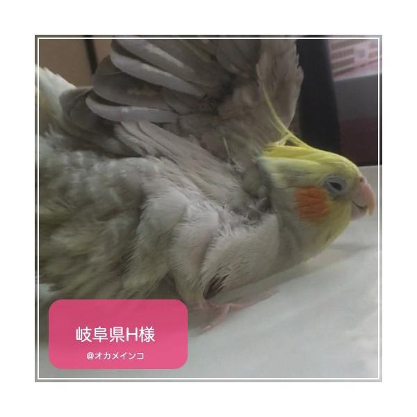 鳥専用 サプリメント/ネクトンS (35g) bird-style 04