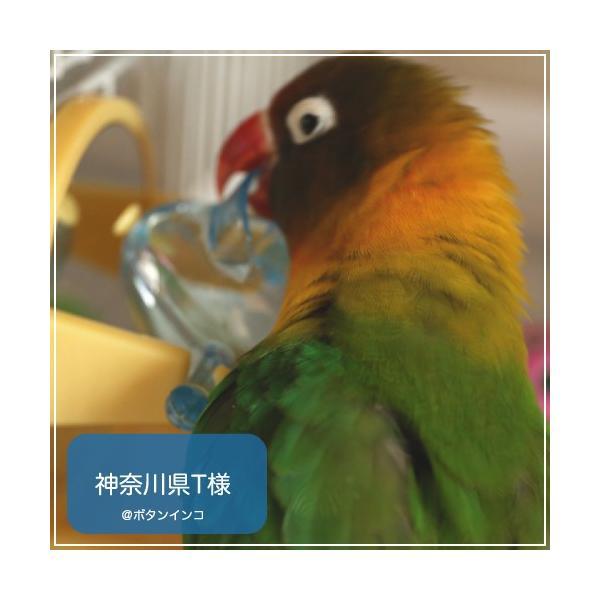 インコ 鳥 おもちゃ/チップ アンド トリート Tip & Treat|bird-style|05