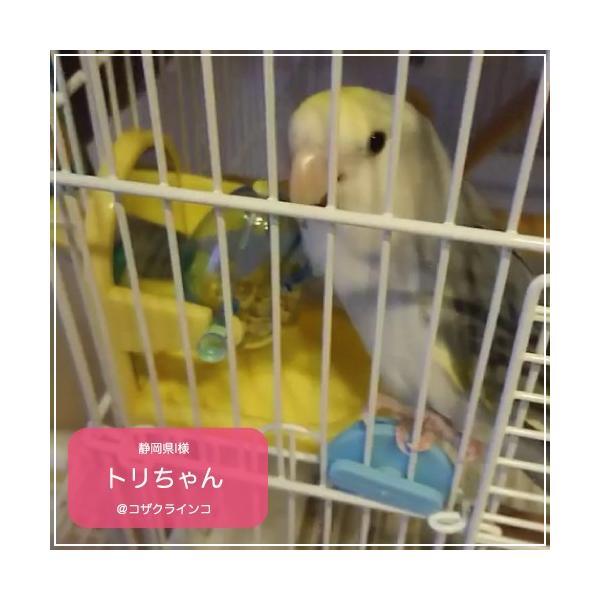 インコ 鳥 おもちゃ/チップ アンド トリート Tip & Treat|bird-style|06