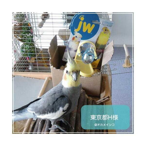 インコ 鳥 おもちゃ/チップ アンド トリート Tip & Treat|bird-style|07