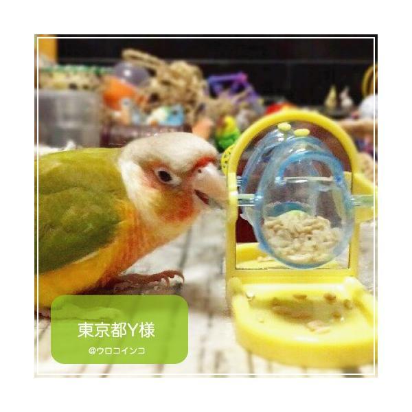 インコ 鳥 おもちゃ/チップ アンド トリート Tip & Treat|bird-style|08