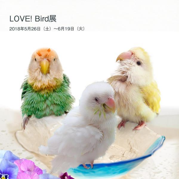 tokyoShiori / LOVE! Bird展公式カタログ1/コザクラインコ / 245A0232