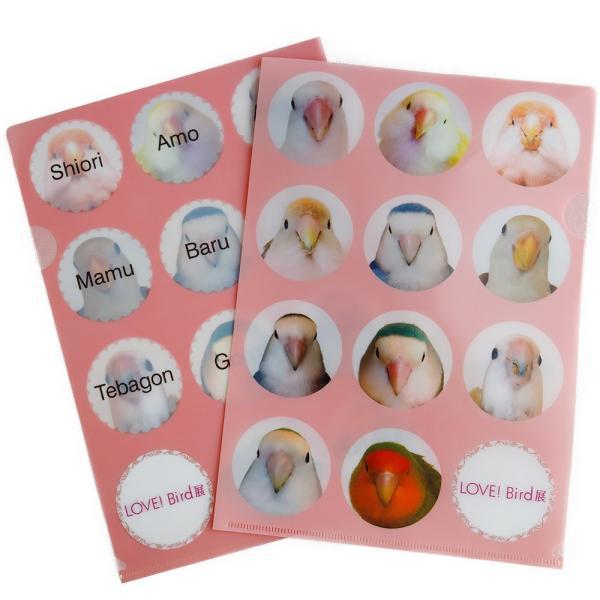 tokyoShiori / LOVE!Bird展クリアファイル / コザクラインコ / 245A0240 ネコポス 対応可能 ( BIRDMORE バードモア 鳥用品 鳥グッズ 雑貨 グッズ 鳥 とり )|birdmore
