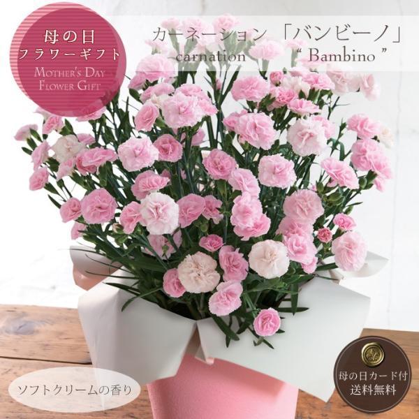 母の日プレゼント(ギフト)2019・カーネーション「バンビーノ」(カーネーション鉢植え・鉢花)[母の日カード付・送料無料]|bishokuc